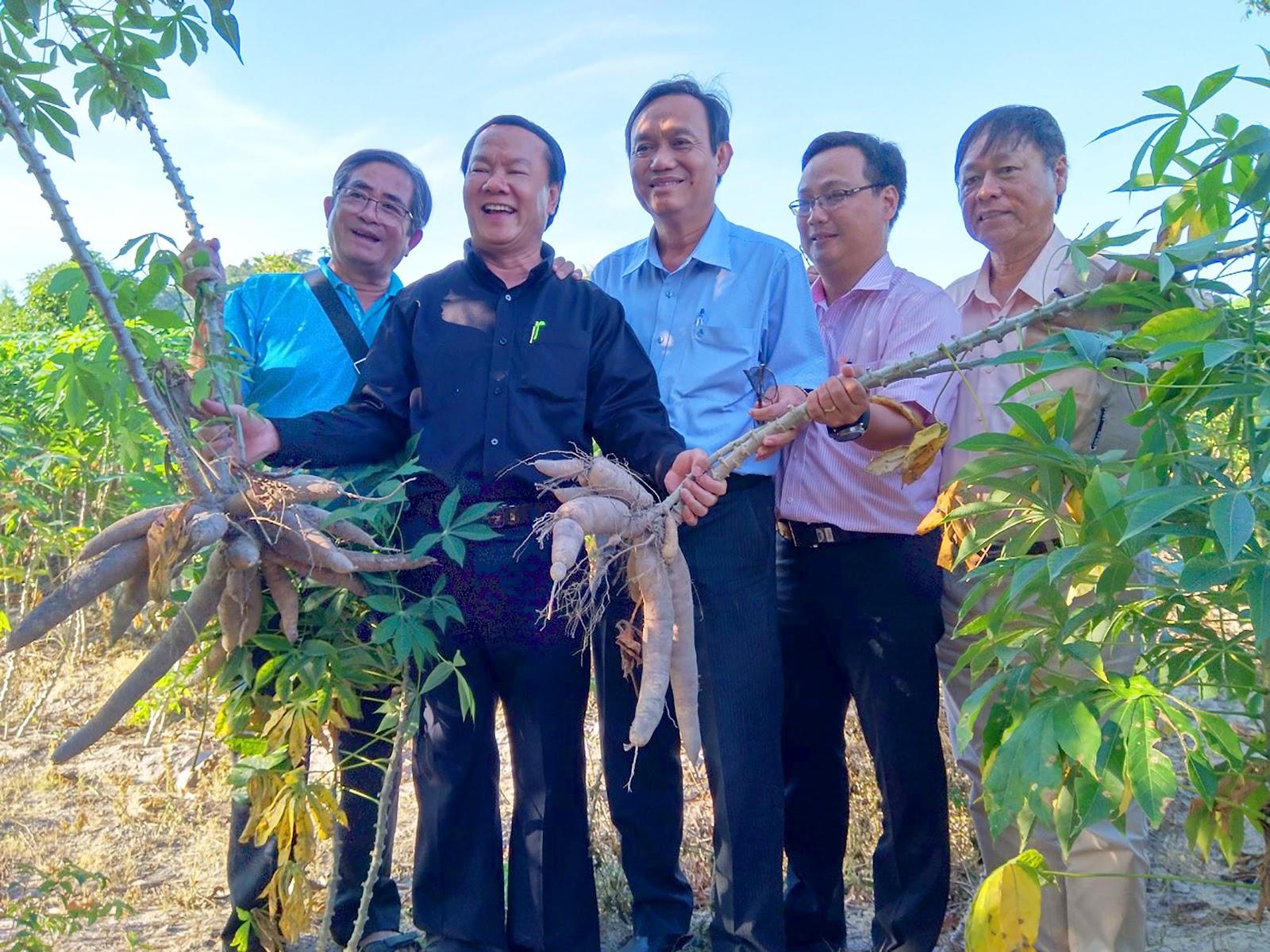 1. Lãnh đạo Sở Nông nghiệp & PTNT An Giang cùng với lãnh đạo Tập đoàn Sao Mai phấn khởi trước vụ mì 2019 tại huyện Tịnh Biên