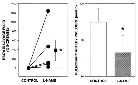 Nitric oxide (NO) synthase inhibition with L-NAME significantly increased the severity of exercise-induced pulmonary hemorrhage in 5 racehorses run to their peak speed. Pulmonary artery pressure was significantly reduced [99].