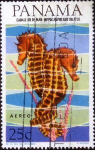 Морские кони и коньки