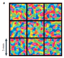 Figure 2.2 - A 3x3 box of 3mm by 3mm voxels representative of activity in neuronal ensembles