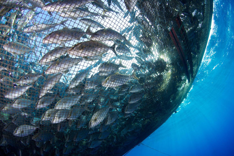 Can Deepwater Aquaculture Avoid the Pitfalls of Coastal Fish Farms ...