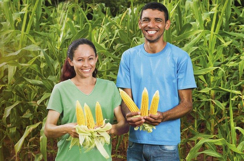 Programa deve chegar a até 1 milhão de agricultores familiares do Nordeste brasileiro. (Fonte: Fotos Públicas)