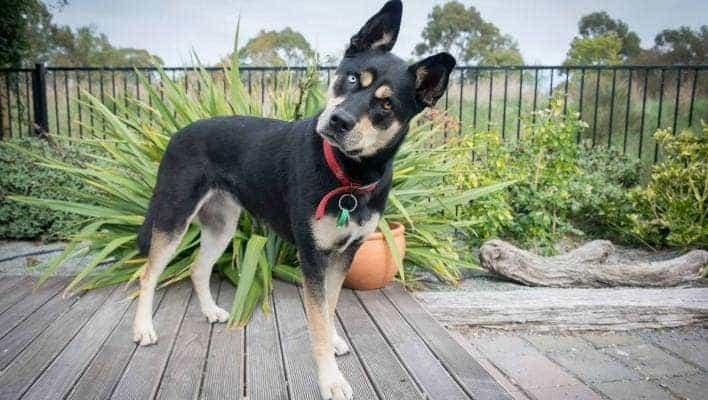 A dog standing on a wood deck  Description automatically generated with low confidence