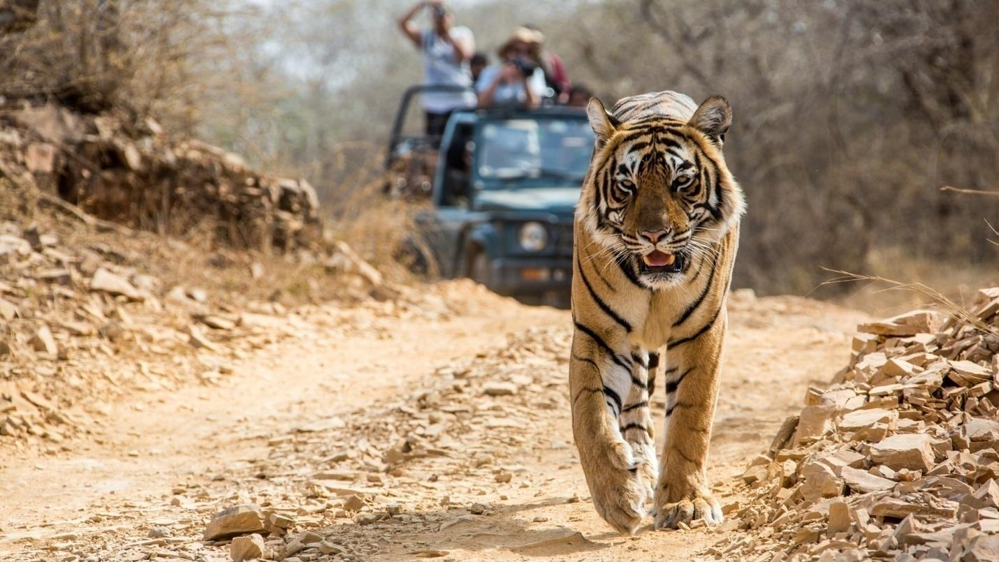 C:\Users\Admin\Desktop\bandhavgarh-national-park.jpg
