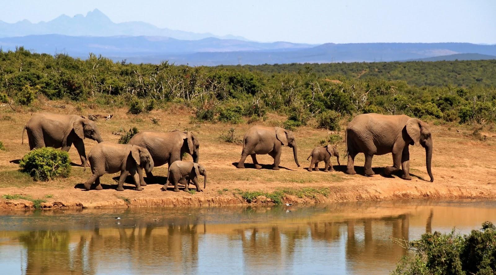 Jubulani safaris, Zimbabwe
