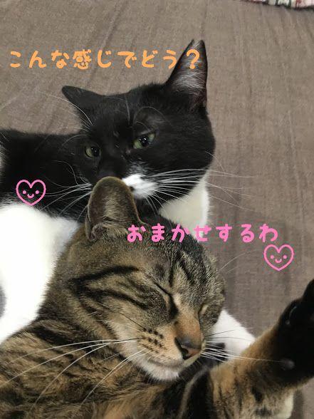 【猫が毛づくろいをする理由】猫の本能と習性について