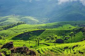 Munnar for Solo Female Travelers