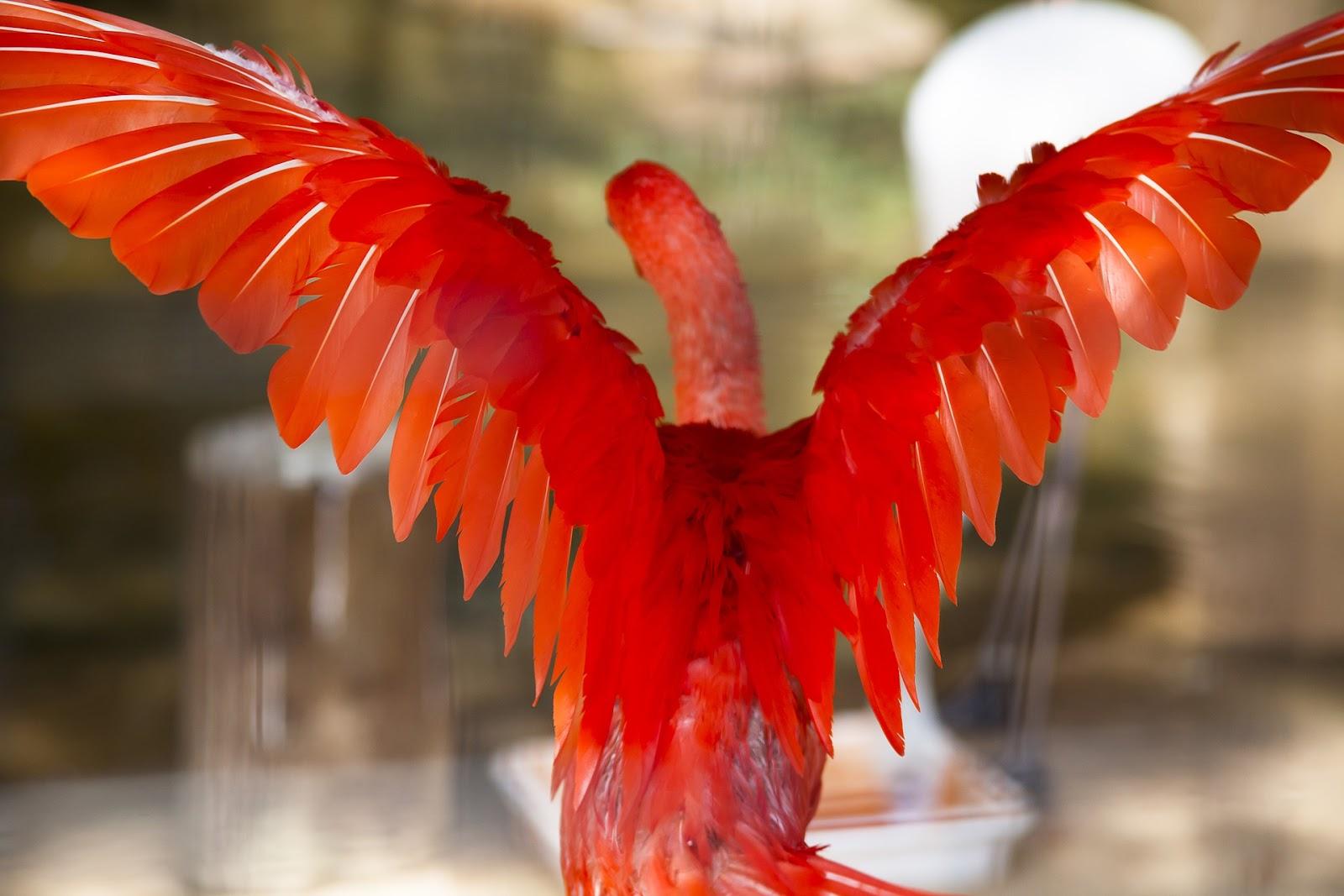 Czerwony ptak z rozłożonymi skrzydłami.