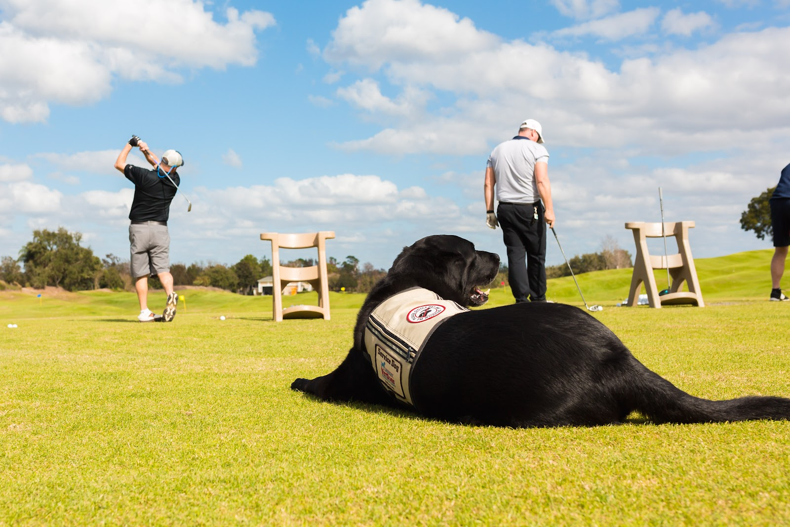 Two Stories Media captures veterans and a service dog golfing during Tee It Up for the Troops annual reunion event.