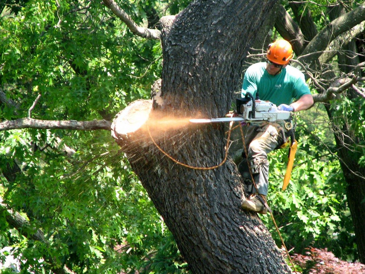 tree cutting fredericksburg.jpg