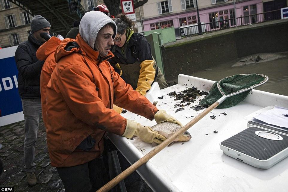 新鮮的開始:他們只用了三天的時間就把營養在運河裡的4.5噸鱒魚,鯉魚和b魚
