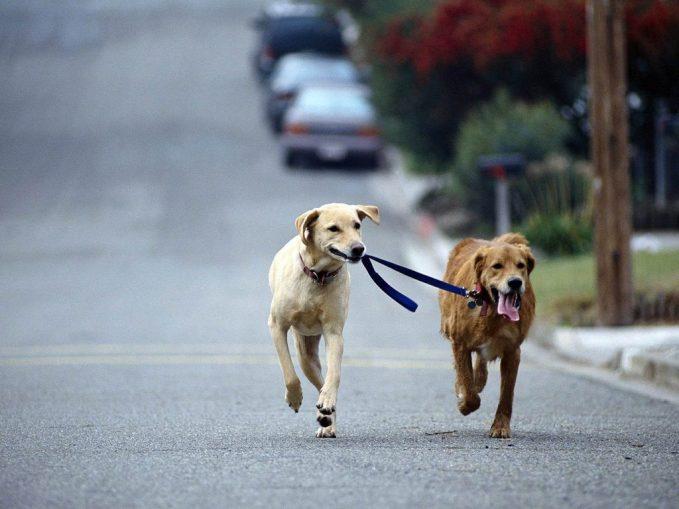 Pasear al perro, beneficios
