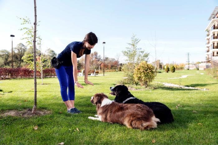 Como Ensinar o Cachorro a Deitar 1