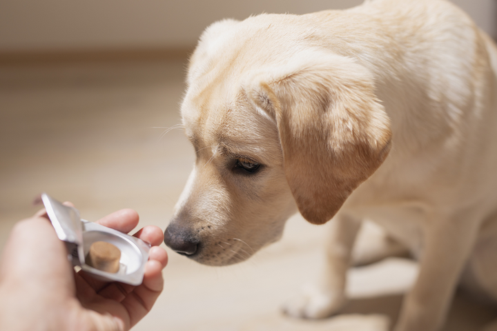 Do Dogs Require Vitamins in Their Diet?