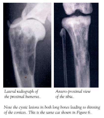Radiograph of a cat with severe CKD and marked secondary renal hyperparathyroidism. Reproduced from Barber (1999)