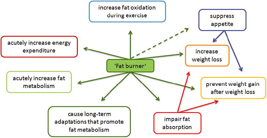 fat burners, fat metabolism and weight loss
