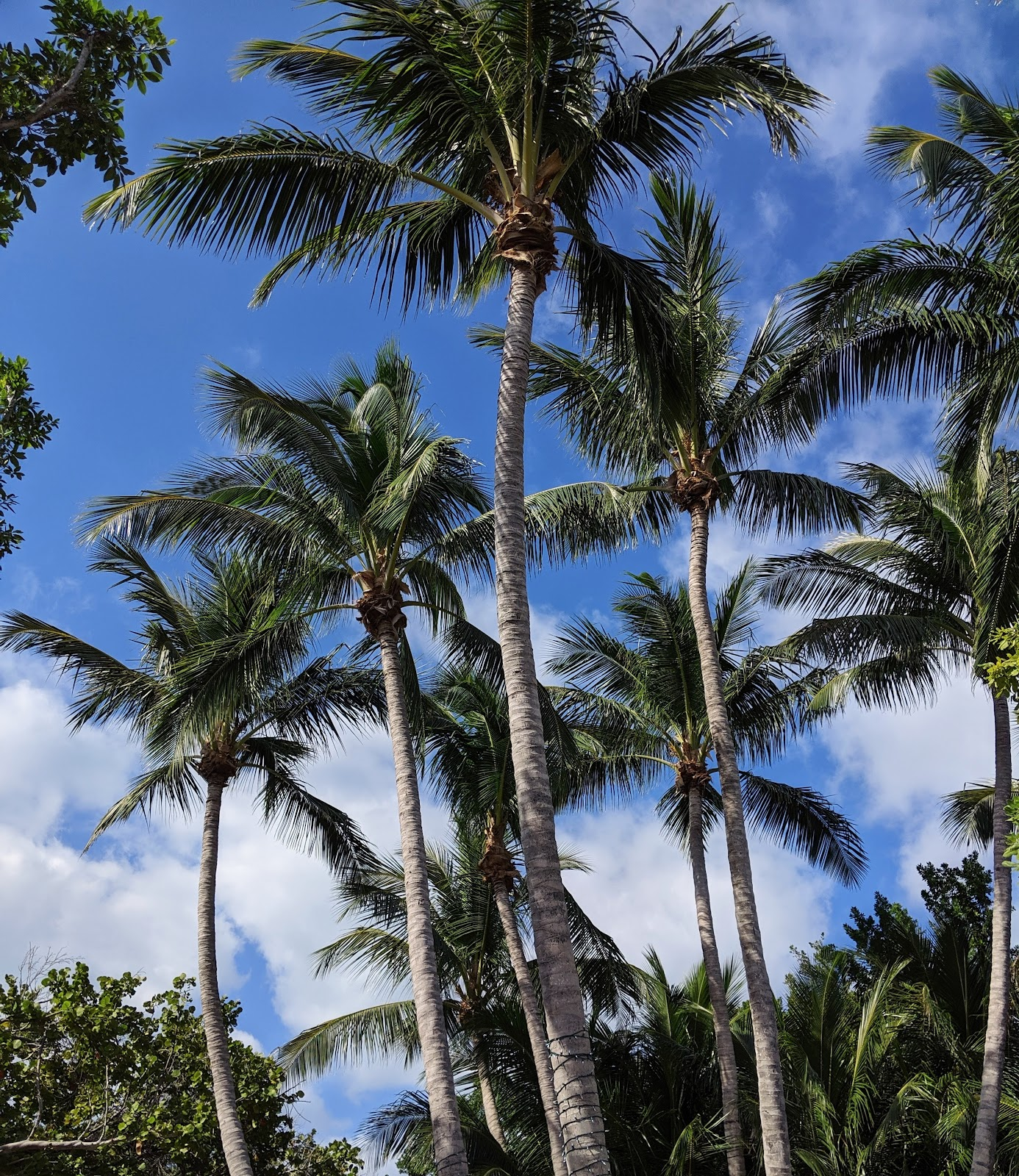 קי בסקיין יום טיול בפלורידה לאן לטייל חופים יפים פלורידה טיול מאורגן key biscayne