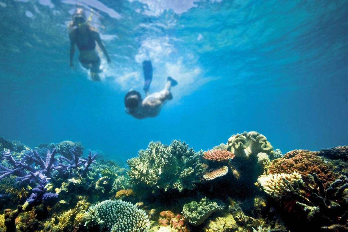 Strap on your snorkel and hit The Great Barrier Reef