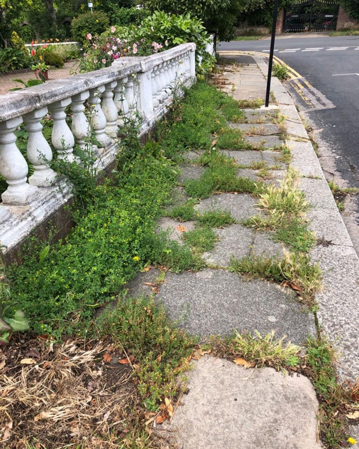 Two elderly women are understood to have suffered head injuries when they tripped over weeds