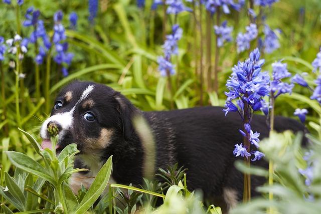 Plants like rhubarb, may apple, and wisteria are toxic to dogs. Photo: pixabay.com