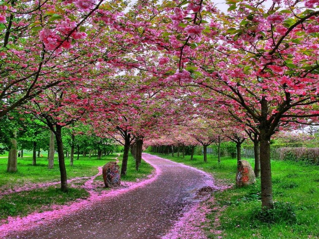 Image result for spring season in China images