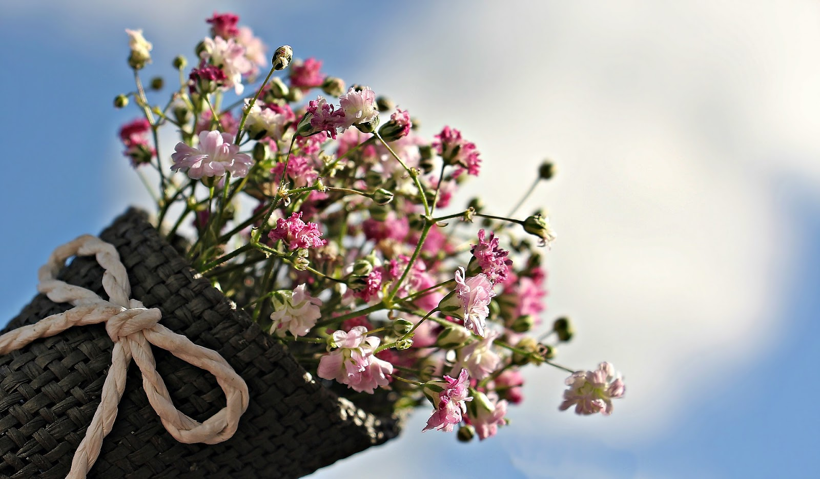 Carnations in a basket