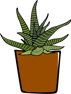Zebra Cactus