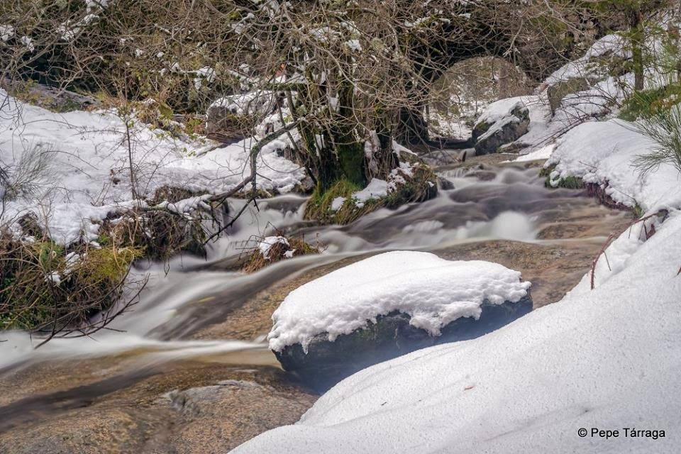 La imagen puede contener: árbol, nieve, planta, exterior, naturaleza y agua
