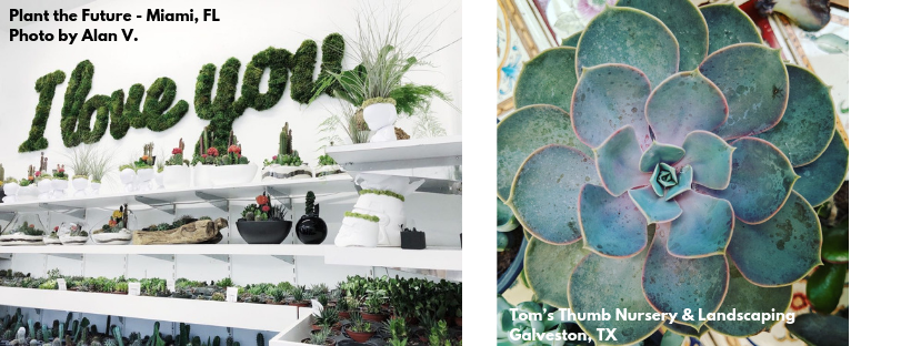 Top 25 Trendy Plant Shops Yelp