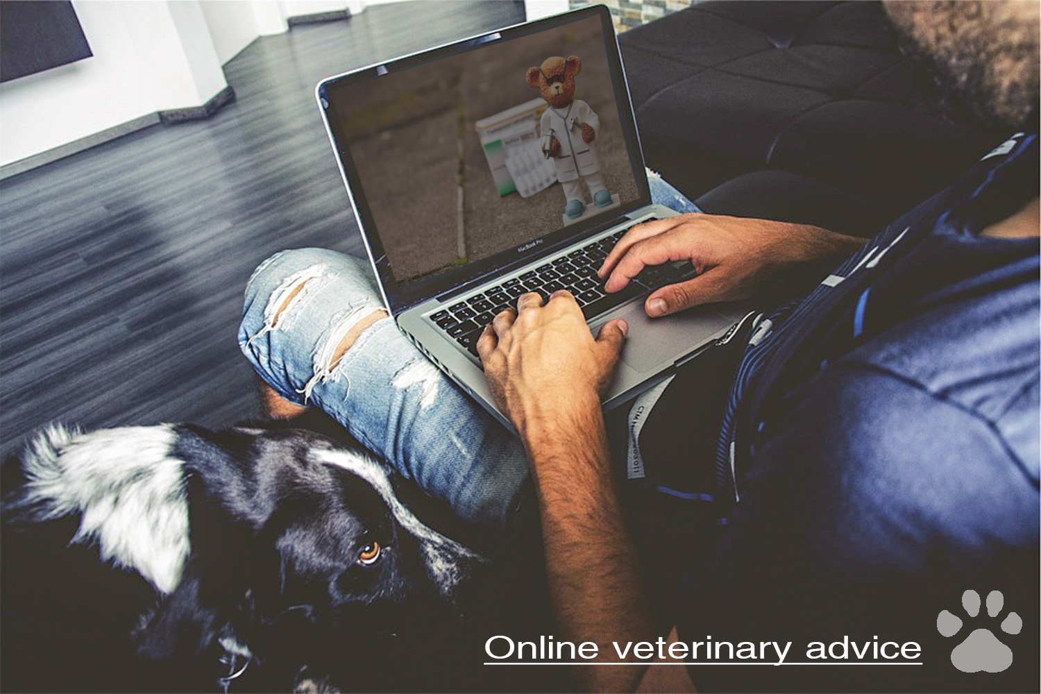 online veterinary advice