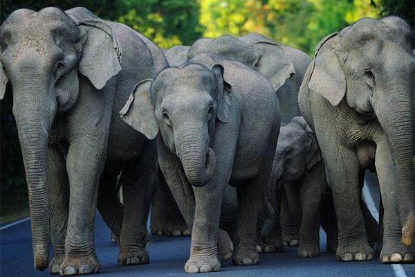 Nằm mơ thấy voi