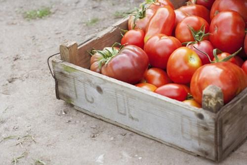 10 thực phẩm hàng ngày tuyệt đối không để tủ lạnh