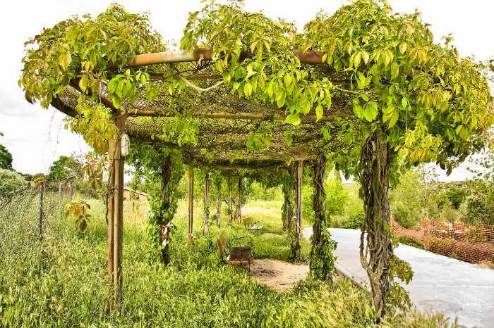 orchard pergola