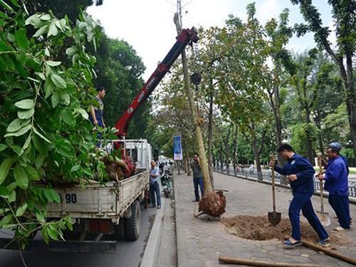 Cắt tỉa cây rất cần thiết vào mùa mưa này