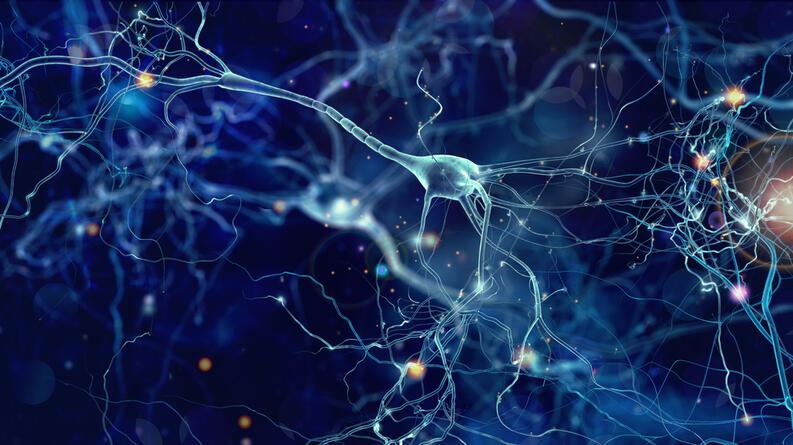 neuronas 1