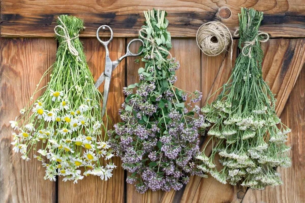 Травы, полезные для женского здоровья: какие сборы травы пить для здоровья женщин