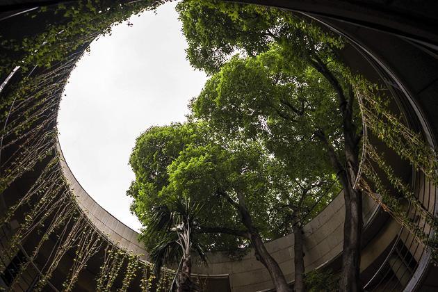 Resultado de imagen de jardin botanico valencia