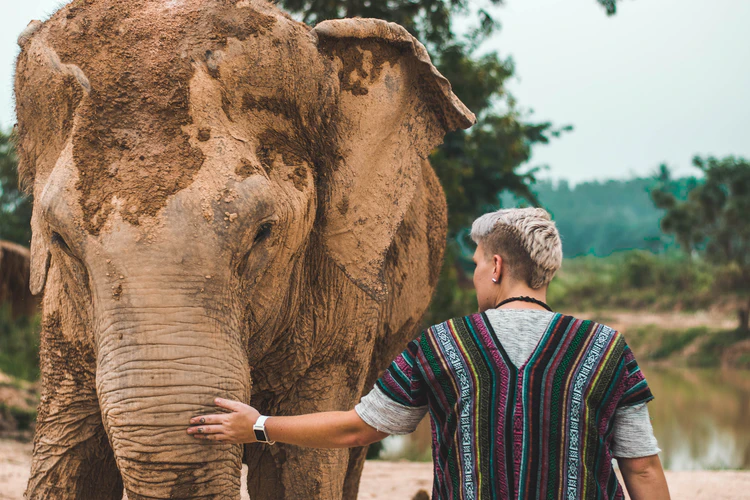 A tourist with an elephant at a sanctuary in Thailand.