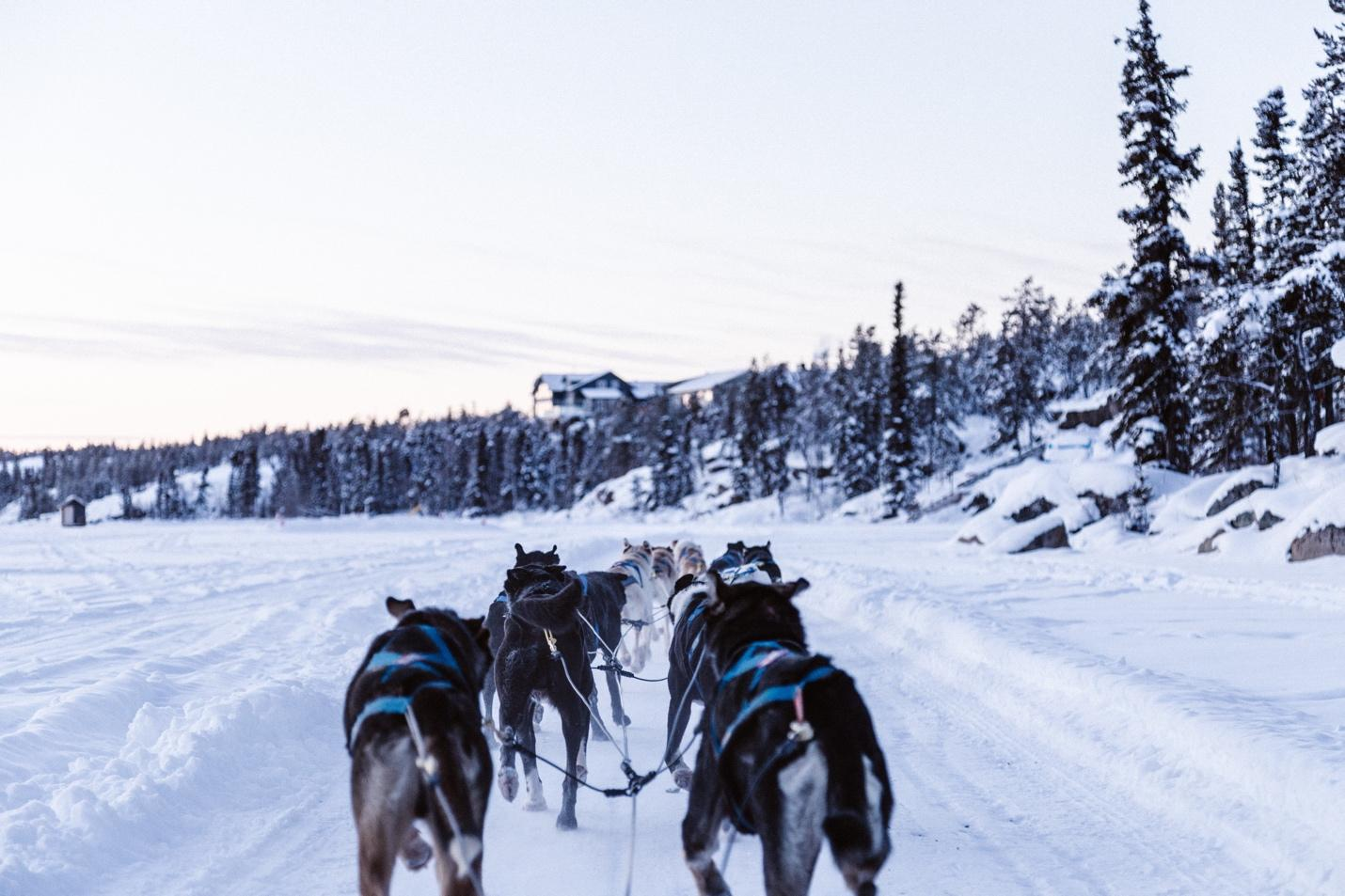A group of horses pulling a sled through the snow  Description automatically generated with medium confidence