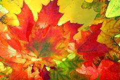 autumn-fall-leaves-3361306.jpg