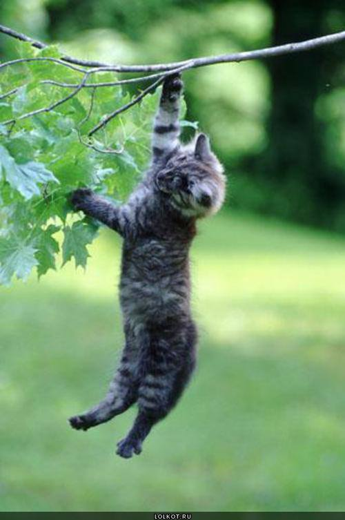The Cat who aspires to be a monkey!
