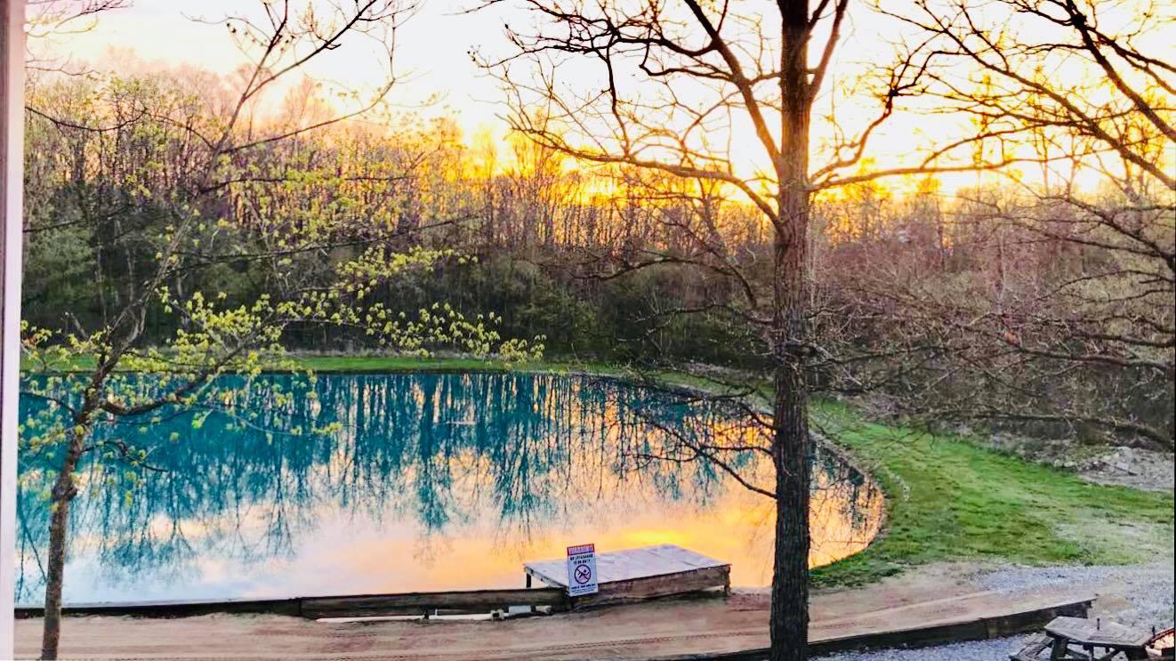 trees surrounding pond