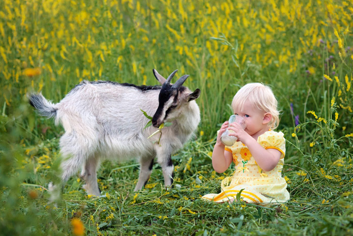 Сколько молока может давать одна коза