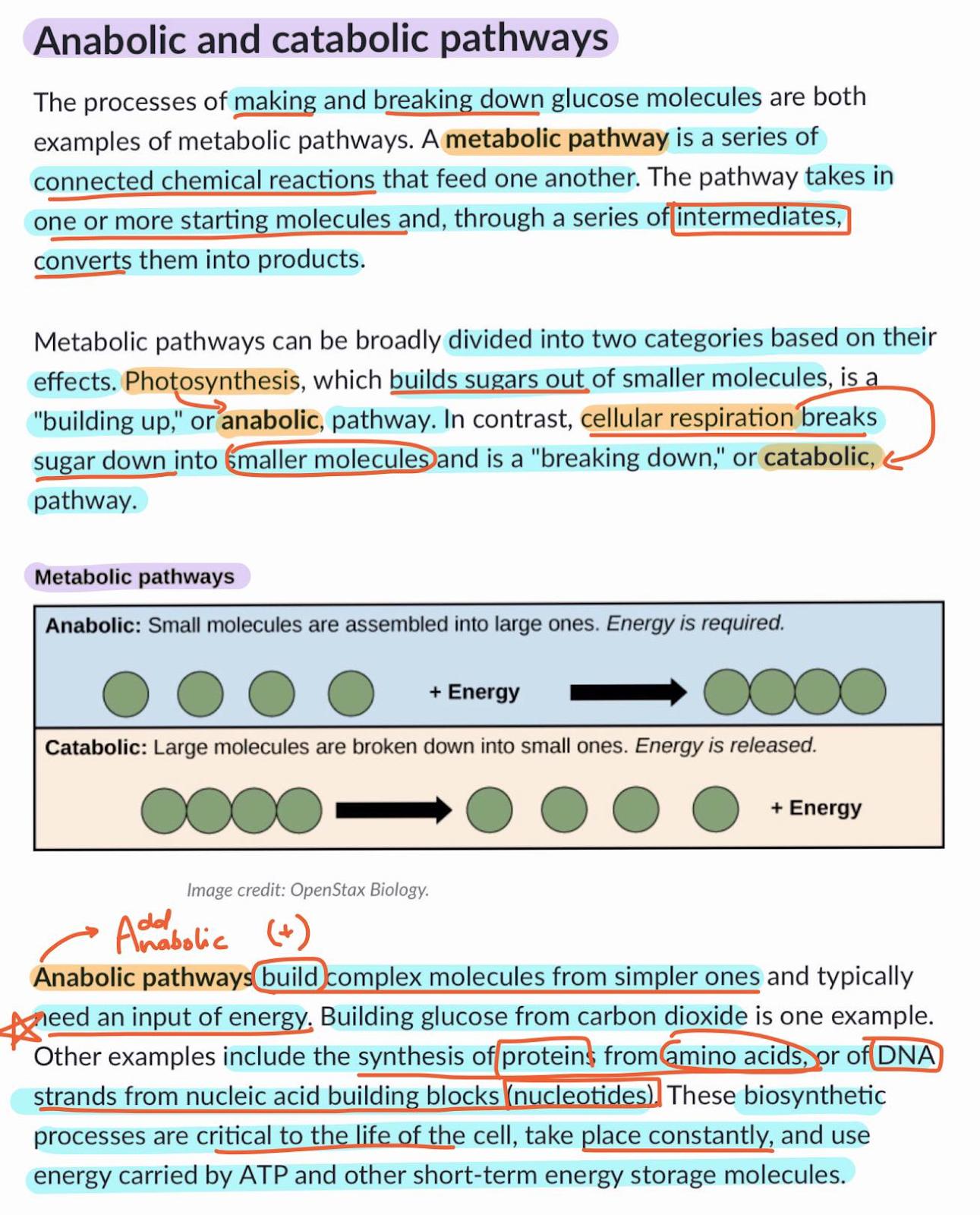 Progressive Summarization for med school notes, med transes, and information dense material Celz Alejandro
