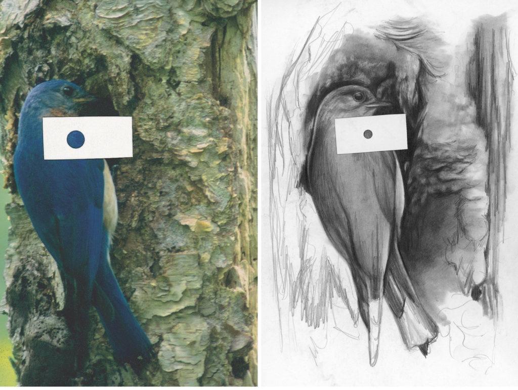 So sánh tông màu |  Khái niệm cơ bản về bút chì vẽ bằng than chì với Lee Hammond |  Mạng lưới nghệ sĩ