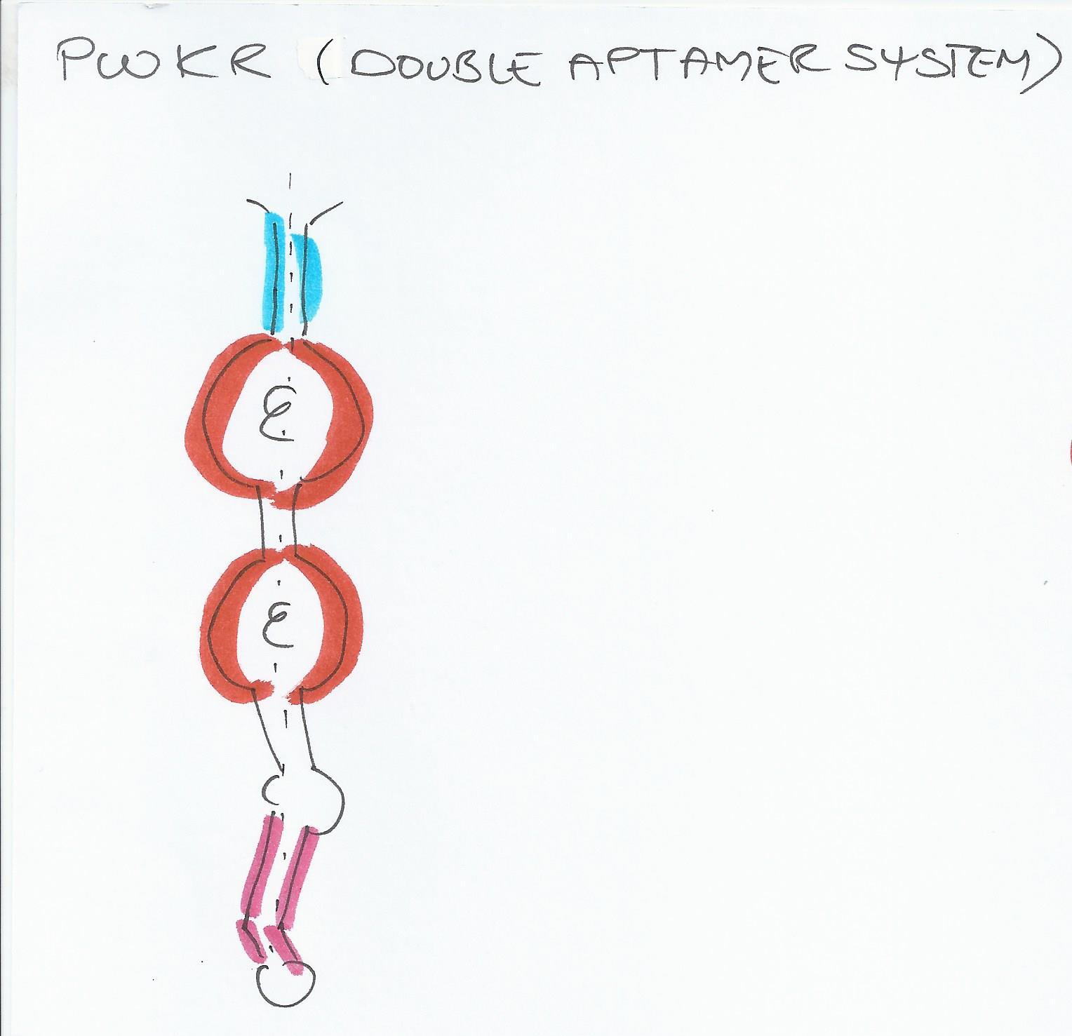 PWKR double FMN aptamerjpg