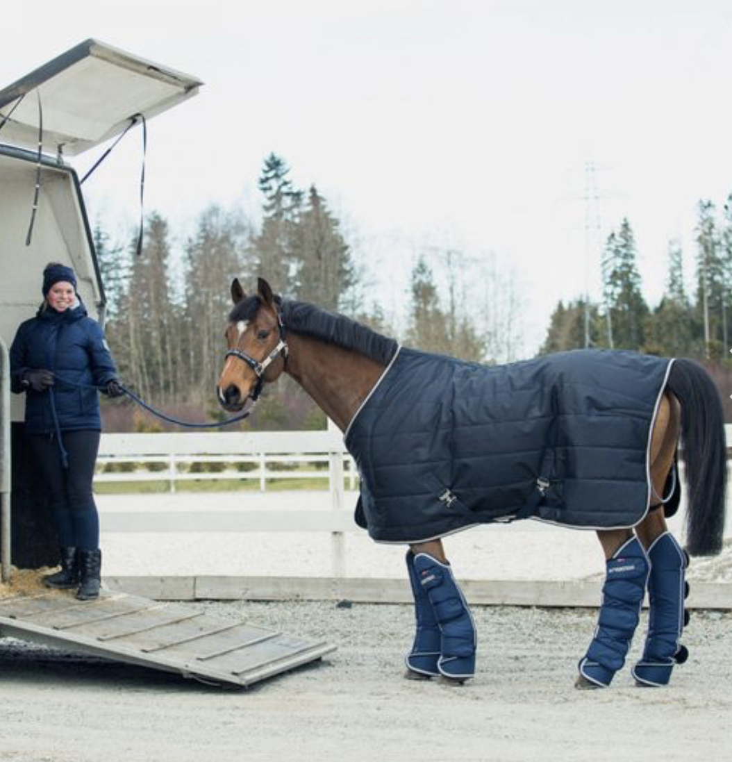 horse dressed for shipping