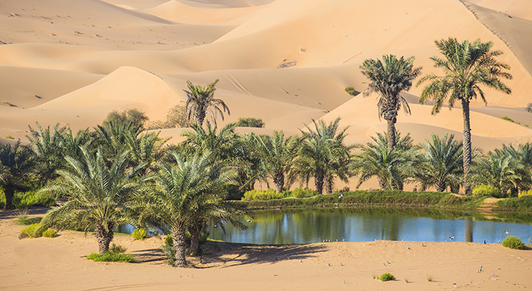 Your House Could Be the Oasis in an Inventory Desert | MyKCM
