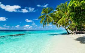 「the beach」の画像検索結果