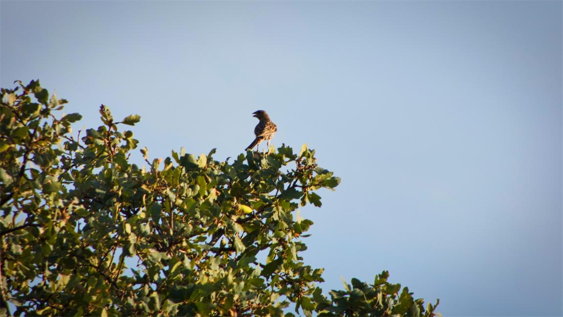 Distant Calling Bird.jpg